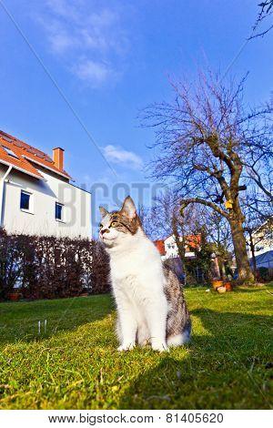 Cute Cat Enjoys The Garden