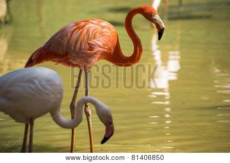 pink and white flamingo
