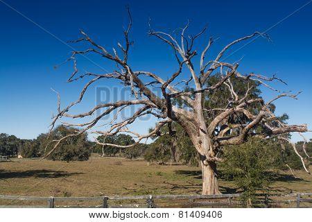 Tentacle Tree