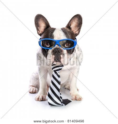 French bulldog in blue glasses and tie isolated on white