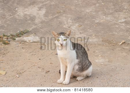 wild cat sitting on footpath