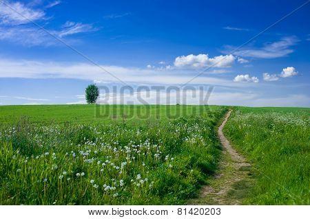 Footpath In The Field