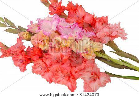 Bouquet Bright Gladiolus