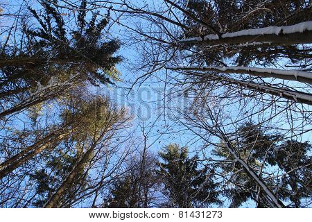 blue sky and treetops