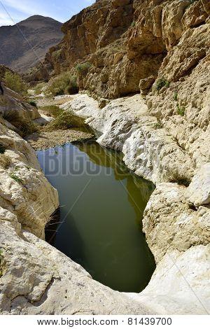 Nahal Zafit In Negev Desert.