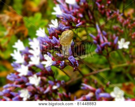 Baby Snail on flowers
