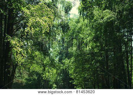 Background Wild Forest, Foliage, Vegetation