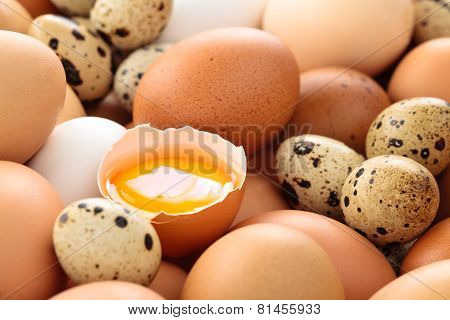 Fresh Eggs Background.