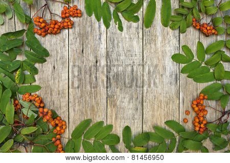 Vintage style frame with mountain ash berries (Sorbus aucuparia) on raw wooden background.