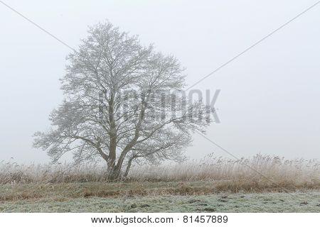 Tree Standing In A Foggy Winter Landscape