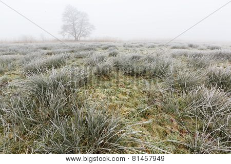 Winter Landscape Of Grassland On Misty Morning