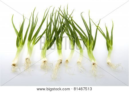 Green Onion Chives