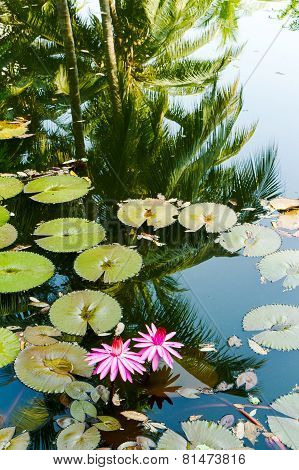 Water lily in the lagoon with reflections of the surrounding rain forest