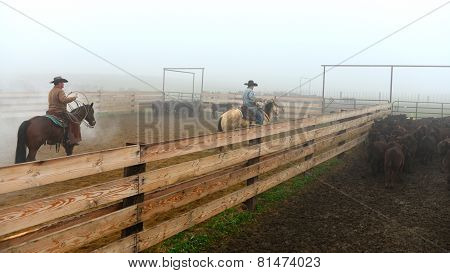 Branding Calves in the Fog