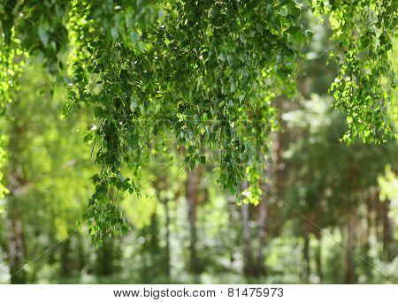 Foliage, Freshness, Summer