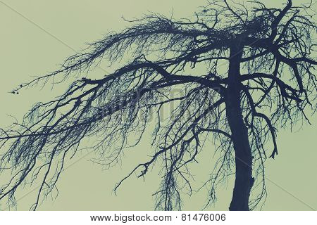 Mysterious Tree, Scary Forest