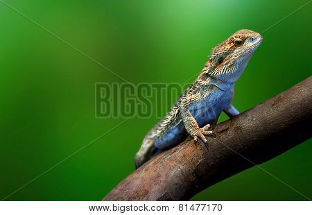 Lizard In Wildlife On Tree Branch On Tropical Island