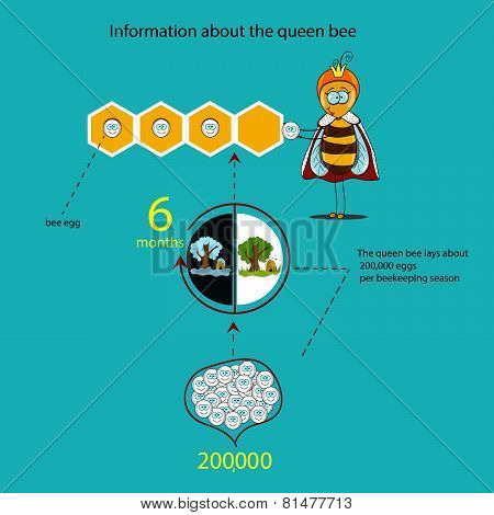 Information About The Queen Bee (seasons)