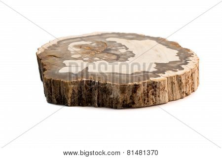 Petrified Wood Madagascar Flat Isolated White