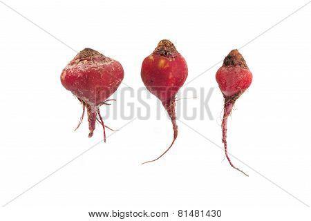 3 Red Beeds