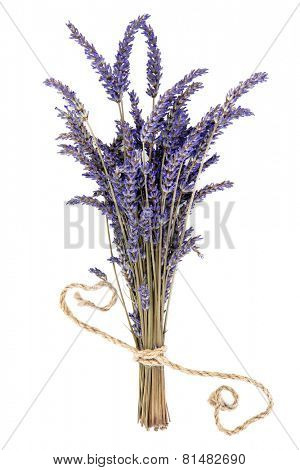 Lavender herb flower bunch over white background. Lavandula angustifolia.