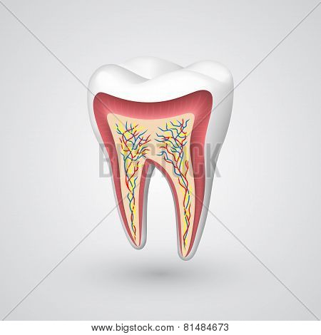 Vector tooth sectional