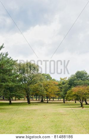 Landscape Of Trees And Lawn Field