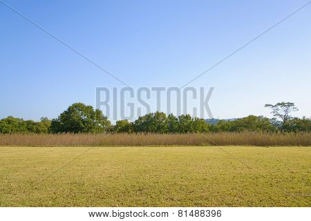 Lawn Field And Trees With Clear Sky