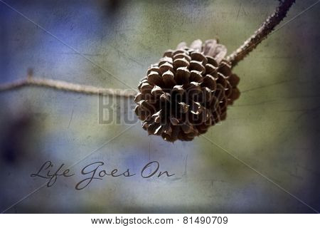 Ponderosa Pinecone Life Goes On