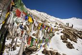image of passed out  - Prayer flags at Chang La Pass - JPG