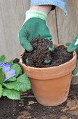 stock photo of loam  - gloved hand holding loam over a flower pot