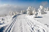 picture of cross hill  - wintry landscape scenery with modified cross country skiing way - JPG
