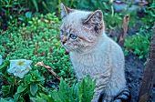 stock photo of catnip  - beautiful gray cat sitting in the green garden - JPG