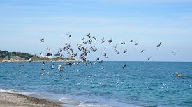 picture of flock seagulls  - soaring seagull flock at a shore in a sunny day - JPG