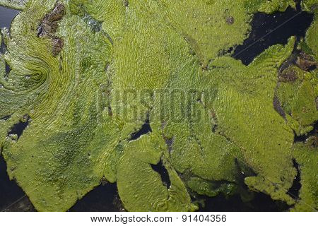 Background Green Slime
