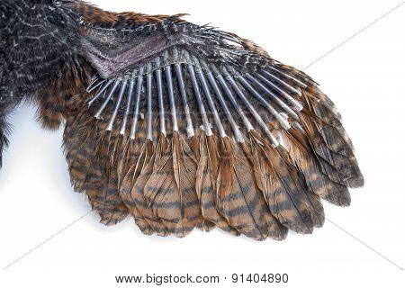 Wings Of Birds