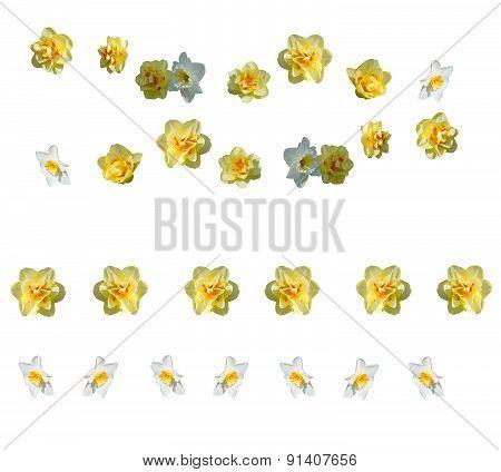 Yellow daffodils margins