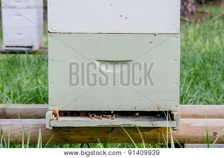 Beekeeping Box Medium Shot