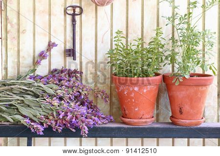 Bunch of sage and pots with herbs in front of an old wall