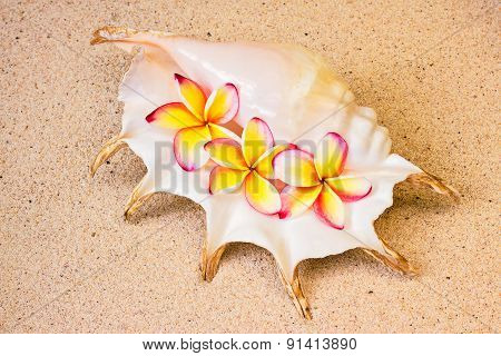 Frangipani Flowers In Sea Shell  On Sand, Top View, Summer Concept
