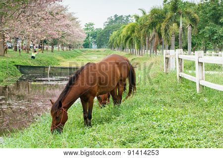 Horse Standing Near Paddock With Green Grass