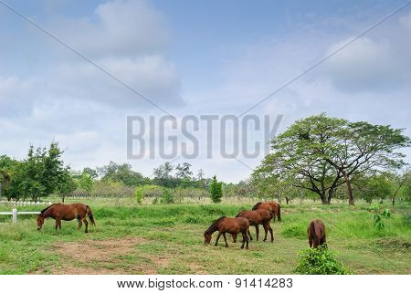 Horses On Landscape View And On A Farm With Green Grass,