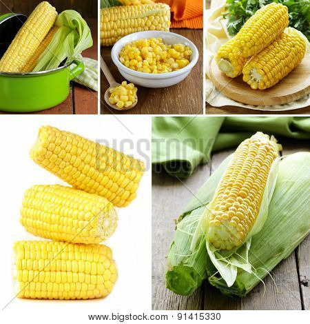 collage of organic fresh and canned corn