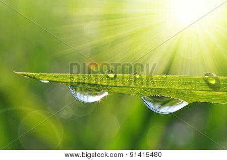 Fresh green grass with water drops closeup