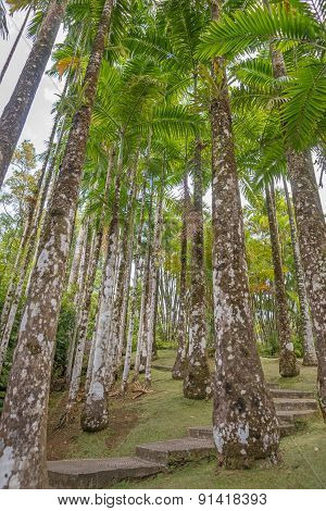 Tropical palm grove