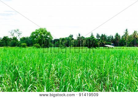 Crop Field With Plant Storage