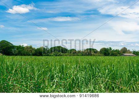 Crop Farm With Cloudy Sky