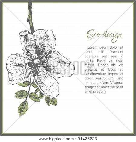Eco card template design with dog-rose flower