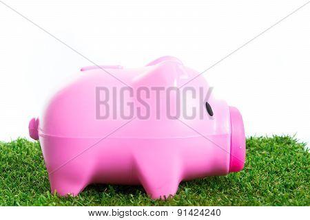 Piggy Bank On Green Grass