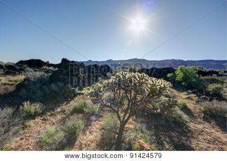 Scraggly bush
